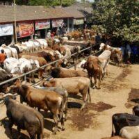 Syarat Hewan Qurban Serta Tips Memilih Hewan Ditengah Pandemi