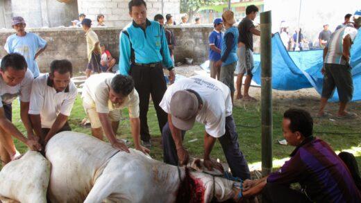 Tata Cara Menyembelih Hewan Kurban Saat Pandemi Corona